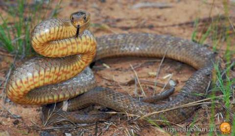 5 Longest Snakes in the World