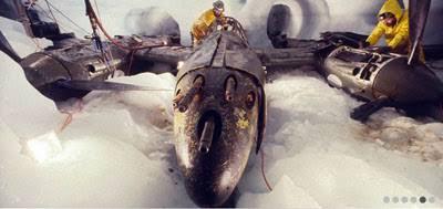 Pesawat Perang Dunia II Yang Hilang Di Segitiga Bermuda, Ditemukan Kembali Seperti Ini
