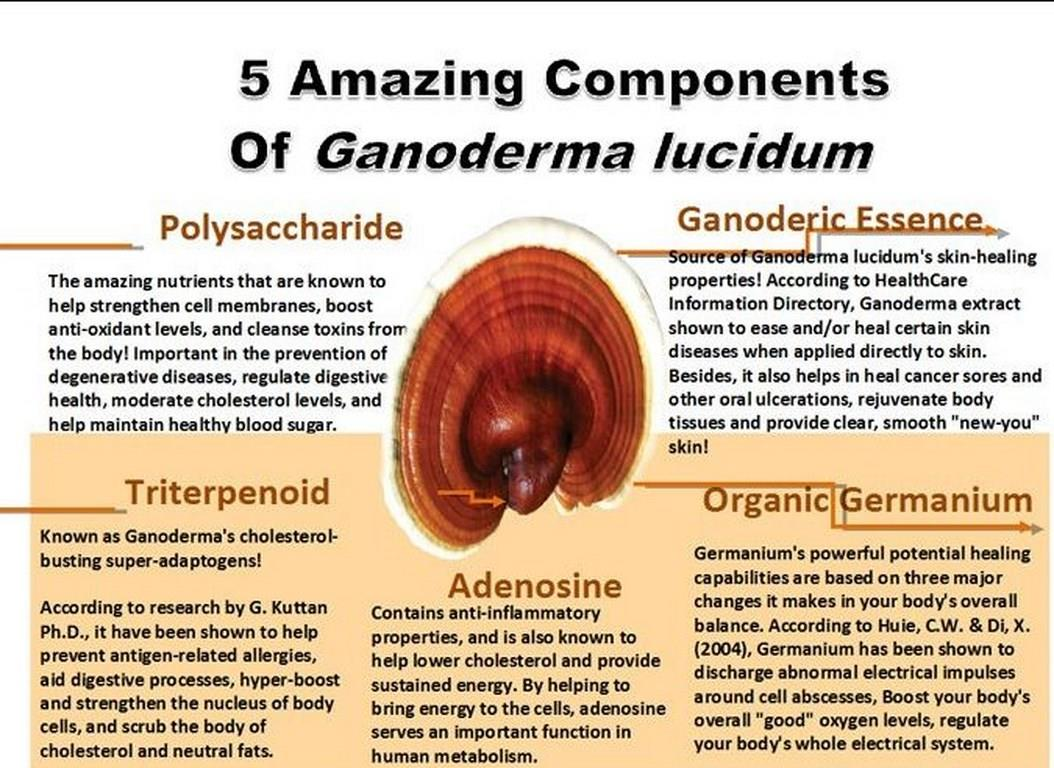 What's so special about Ganoderma mushroom?