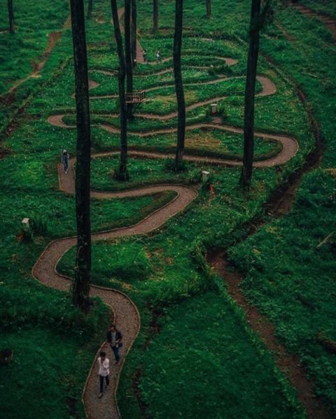 10 Potret Keindahan Taman Anggrek di Bandung