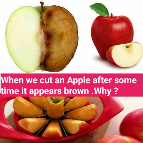 When we cut an Apple after some time it appears brown , Why ?