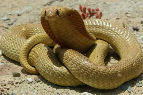 5 Of The World's Most Venomous Snakes