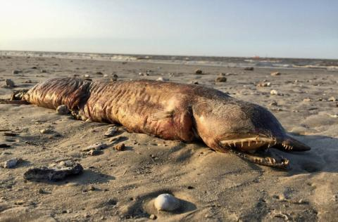 5 Mysterious Creatures found on the Beach