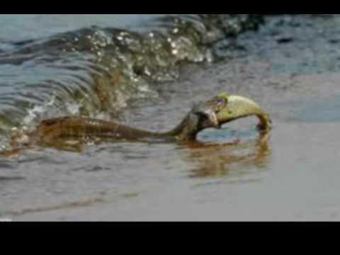 70 साल बाद गंगा नदी में इस अजीबोगरीब सांप को देखकर लोगों के उड़ गए थे होश